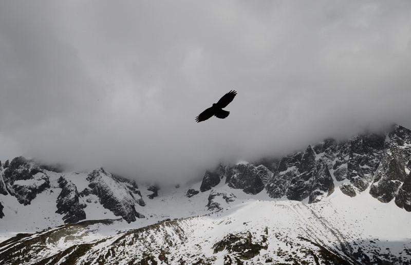 eagle-opt2