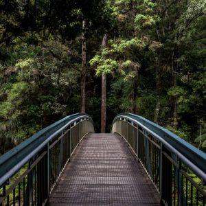 bridge-blog-opt